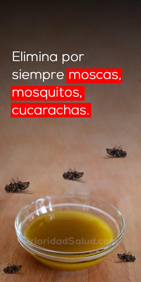 Elimina las moscas, los mosquitos y las cucarachas por siempre con este truco casero