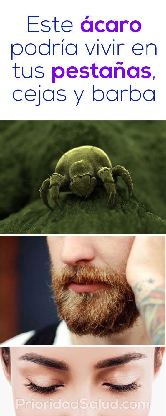 Este acaro podría vivir en tus pestañas, cejas y barba