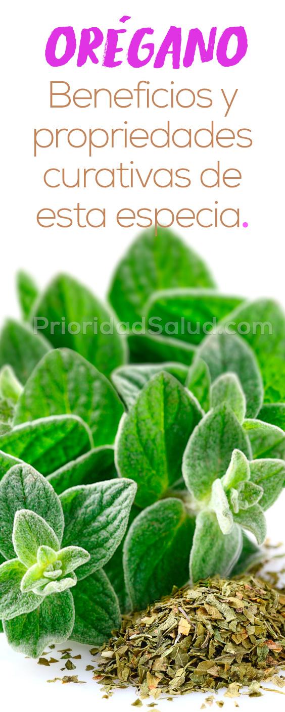 Orégano, propriedades y beneficios de una las especias y plantas medicinales aromaticas.